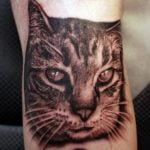 Gato tatuado en brazo